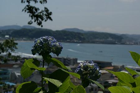 紫陽花と鎌倉の海0601tb