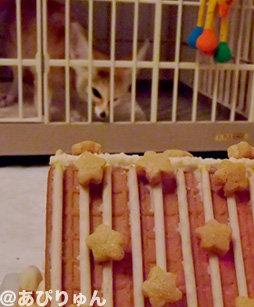 お菓子の家8
