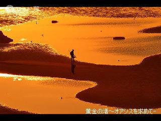 http://art3.photozou.jp/pub/784/784/photo/17194235.v1232688285.jpg