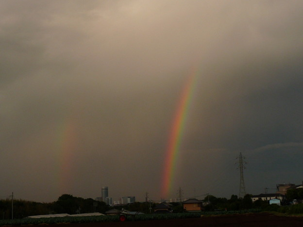 夕日の虹が立ちました。 P1330833