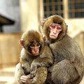 Photos: 小猿(4)