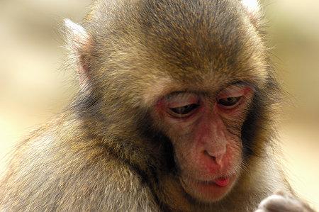 小猿(1)
