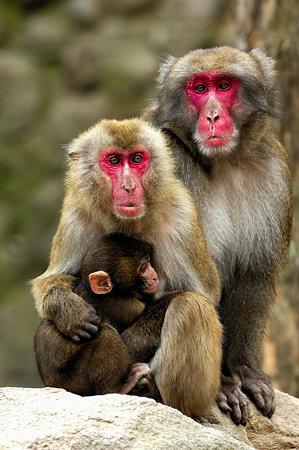 親子猿(5)
