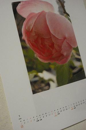 お気に入りの薔薇で~1月のカレンダー