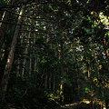 Photos: 熊野古道