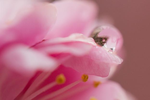 Photos: 梅の梅
