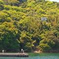 Photos: 新緑GWののどかな風景:われら大自然満喫派 in 笠岡諸島♪