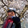 桜とアコーデオン in 千光寺山