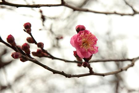 春の気配・・