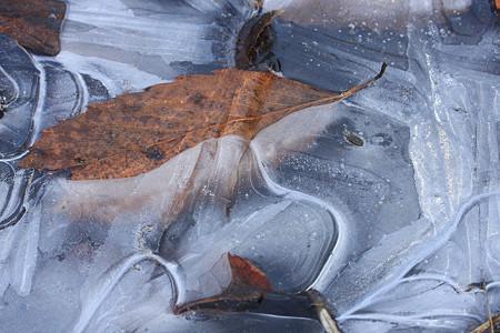 田んぼの氷