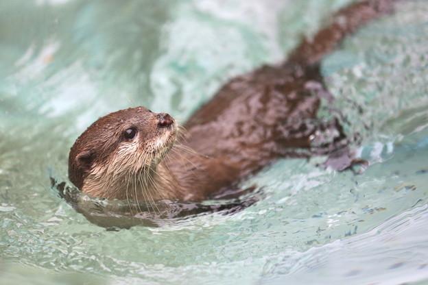 立ち泳ぎならぬ、秘技「横泳ぎ!!」