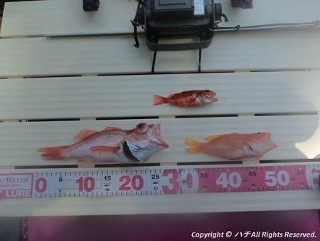 2014-04-26魚は何処に?? (10)