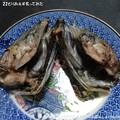 Photos: 2014-06-22とりあえず炙ってみた (7)
