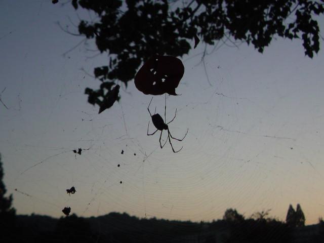 蜘蛛と朝の空