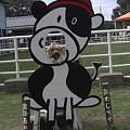 Photos: 淡路島牧場 (3)