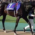 Photos: ニホンピロアワーズ(1回東京8日 11R 第31回 フェブラリーステークス(GI)出走馬)