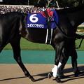 エイシンフラッシュ(4回東京9日 11R 第148回 天皇賞(秋)(GI)出走馬)
