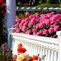 ~薔薇の園~