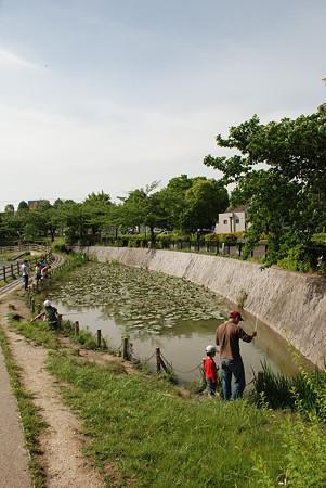 新海池公園(池全体1)