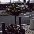 Photos: 花~~~~~~~~~~\(^^\)(/^^)/