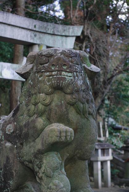 針綱神社狛犬 5