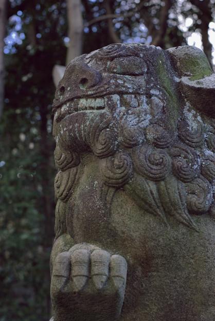 針綱神社狛犬 3
