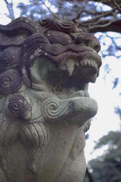 針綱神社狛犬 1