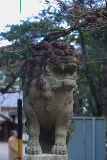 針綱神社狛犬 0