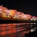 河津川も綺麗なライトアップ・・・
