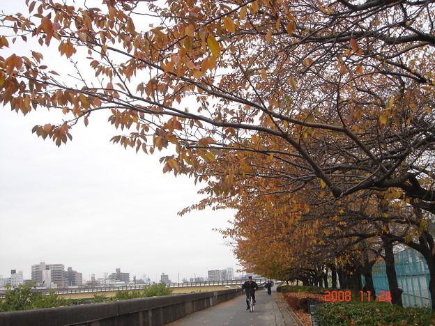 隅田川堤防 DSC00598