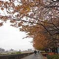Photos: 隅田川堤防 DSC00598