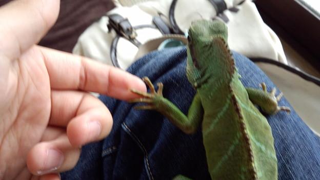 初めての爬虫類、握手!