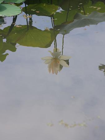 水面に映る影
