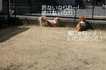 お庭で遊ぼう♪ 7
