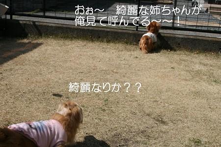 お庭で遊ぼう♪ 6