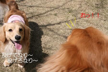 お庭で遊ぼう♪ 5