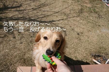 お庭で遊ぼう♪ 4