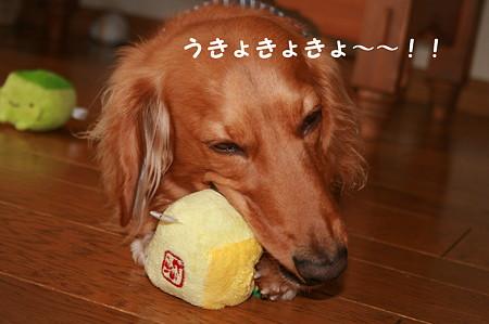 おNEWおもちゃ 4
