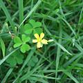 写真: おさんぽ中にみつけた小さい花