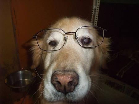 ひまわりにメガネをかけてみました(笑)