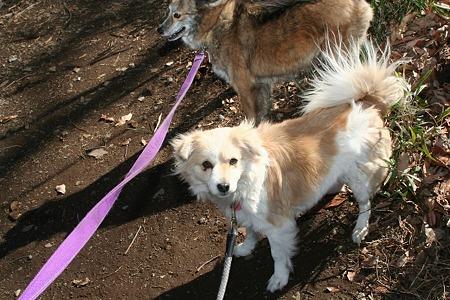 ミニカとクレアのお散歩行きました