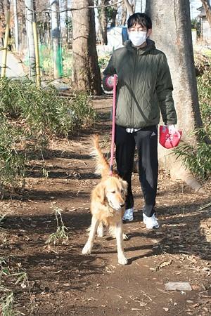 お散歩隊のお兄さんとお散歩トレーニング中のジュリア