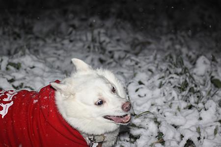 ましろちゃん初めての雪かな?大興奮中(^^ゞ