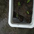 写真: これでもかなり水抜きしたんですが…ミュージックボックス床上浸水(>_<)
