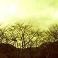 Photos: 20090301_06