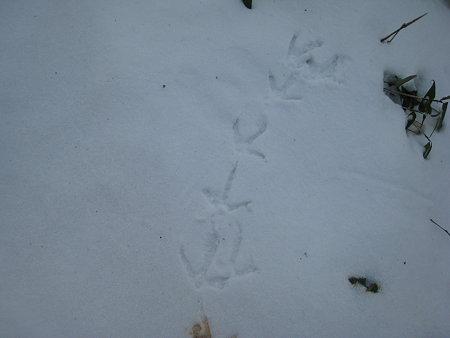 鳥(?)の足跡