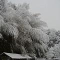 Photos: 雪と竹