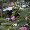 写真: 海蔵寺 03