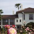 写真: 港の見える丘公園のバラ 02