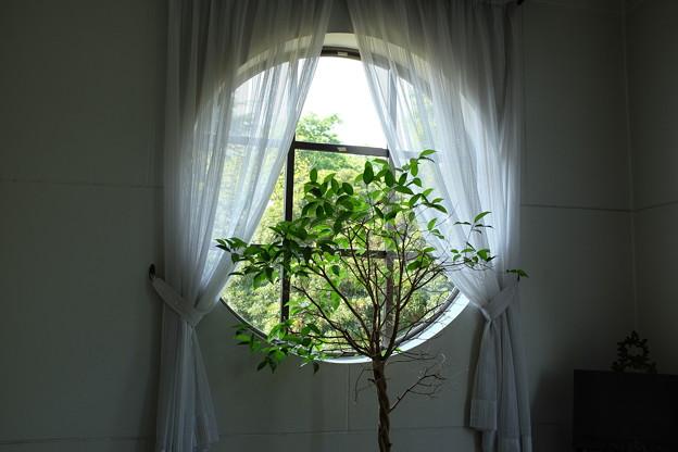 丸窓と観葉植物